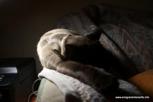 Muraia e mai sedentara. Nu vânează șopârle și îi place mult canapeaua din living seara.